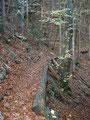 und schon befinden wir uns wieder im Wald und folgen dem Pfad ...