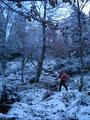 Hier auf dem relativ steilen Steig mußte man Trittsicherheit beweisen. Durch den Schnee und die vielen Wurzeln war es ziemlich rutschig. Stellte aber für uns kein großes Problem dar.