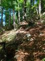 Nun ging es den zuerst bewaldeten Törlspitz-Südhang empor.