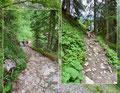 Der mittlerweile felsige Steig leitete uns in eine kleine Waldsenke zur Abzweigung Unterer Hirschenlauf hinunter. Wir drehten uns hier nach links und stiegen den ansteigenden Steig höher.