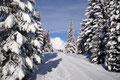 Nach einem kurzen Stück durch den schneebedeckten Wald entlang der Loipe, …