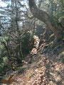 Vom Heuberg-Grasgipfel führte uns der weitere Wegverlauf südwärts den Grat entlang wieder in den Wald hinein. Hier sollte man darauf achten den linken leicht abwärts führenden Pfad zu wählen.