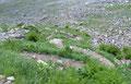 Der 702er-Steig wandte sich nun den Hängen zur Rechten zu und leitete uns in steilen Serpentinen aus der sensationellen Felsarena heraus.