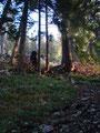 ... und schon tauchten wir wieder in einen Hochwald ein. Vorbei an der Pyhrgashütte, ein Foto von dieser gibts beim Rückweg, schritten wir ...