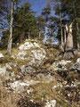 Im Gipfelbereich wurde der Steig ausgesetzter und erheblich steiler. Die vom Schnee noch nassen Wurzeln waren nicht sehr angenehm zu begehen.