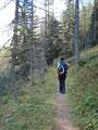 Immer noch dem Weg Nr. 209/218 folgend, durch einen Hochwald.