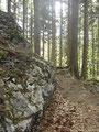 Im Anschluß daran machte ich mich auf den Nachhauseweg. Den Wandersteig vom Lärlkogel zurück bis zur Forstraße ...