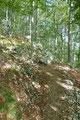Das Gelände steilte etwas mehr an und Serpentinen brachten einem einen Waldhang empor.