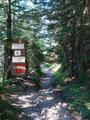 Vorbei am Kalblingatterl, nach rechts ein Stück die Forststraße entlang und schon tauchte ich wieder links über einen Steig in den Wald ein.