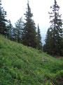 ... verschwanden wir nach kurzer Zeit wieder im Wald.