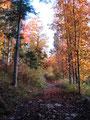 Eine wunderbare Herbstidylle