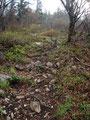 """Der """"Wurzelweg"""" wandelte sich mehr und mehr in einen steinigen Weg, was auch das """"Rutschige"""" minimierte."""