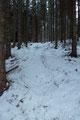 Nachdem ich  die 2. Kehre hinter mir gelassen hatte, drehte mein Routenverlauf links in den Wald hinein. Selbstverständlich könnte man hier als Variante auch die Straße weiter empor wandern.