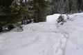 … winterlichen Forststraße, welche mich in einigen Kehren zum darunterliegenden Waldgürtel brachte. Von hier weiter entlang des Sommerweges …