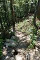 … dem gut ausgetretenen Waldpfad weiter …