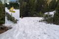 Nachdem ich die anfänglichen Felspassagen hinter mir gelassen hatte, drehte der Steigverlauf nach NW ab und führte mich erneut über Altschneefelder zur nächsten Weggabelung bergab. Sichtlich hinterließ auch hier der Winter seine Spuren!
