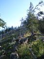 Wir mussten dennoch hier herauf und so kämpften wir uns Meter für Meter durch Unmengen an gefallenem Holz immer weiter nach oben.