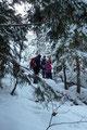 … durch dichten Baumbestand direkt zur Wildfütterungsstelle und …