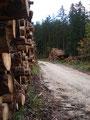 Schnellen Schrittes wanderten wir die Forststraße zur Weißenbachalm entlang.