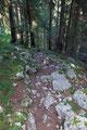 Nach dem Eintauchen in das dunkle Waldstück, brachte mich der steinige von Wurzel übersäte Steig …