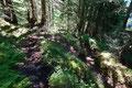 … in weiterer Folge links, den in Serpentinen angelegten Steig durch den steilen Waldhang empor.