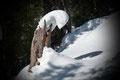 Bald darauf tauchten wir neuerlich in bewaldetes Terrain ein. Frau Holles weiße Pracht verzauberte so manch vor sich hinmodernden Baumstumpf zu abstrakten Kunststücken.