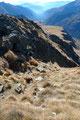 Wie schon erwähnt, der Wind blies ziemlich eisig über den 2433m hohen Gipfel, so machte ich mich nach einer kurzen Rastpause über den Abstieg auf der gleichen Route. Zuerst musste ich die Steilrinne, diesmal aber abwärts passieren und ...