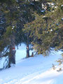 Die letzten Meter auf dem markierten Wandersteig Nr.11 den Berghang hinab ins Tal ...