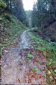 """Nach einem knappen Kilometer wandelte sich der Karrenweg zunehmend zu einem breiten Wanderpfad. Bei jedem Schritt konnte man den Sohlenabdruck im """"saftigen"""", tiefen Boden förmlich fühlen."""