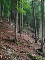 ... jedoch immer noch im Schutze der Bäume den Berg empor.