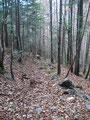 ... weiter durch den Wald, bis zur nächsten Querung. Jetzt folgte ich der Forststraße weiter talwärts, ...