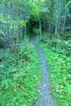 … stieg den Waldpfad Richtung Teicheggalm weiter bergwärts.