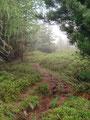 … unzähligen Heidelbeerstauden schlängelte sich der steile Waldsteig …