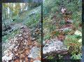 … zu einem Anstieg. Weit angelegte, mit Laub bedeckte Serpentinen schraubten sich den nordseitigen Waldhang empor. Vor zurück … und wieder vor! Charly brachte mit Sicherheit die 3-fache Wegstrecke zusammen.