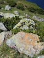 …oder mit bunten Flechten bedeckte Felsbrocken säumten meinen weiteren Weg.