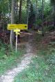 Nach guten 1 ½ km leitet einem die nächste Beschilderung rechts in einen schmalen Waldweg Richtung Bramhosen-Gipfel hinein.