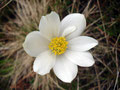 An Alpenblumen in verschiedensten Farben konnte man sich hier erfreuen.