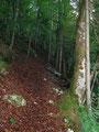 Durch den Wald führte der Steig Nr. 463 in weiten, unzähligen, zuerst in moderat ansteigenden Serpentinen den Budergrabensteig entgegen.