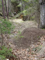 Ich hatte noch nie soviele Armeisenhaufen beim Wandern gesehen wie bei meiner Farnaugupf Überschreitung.