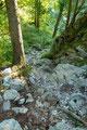 """… eine steinige Passage war rasch die  Forststraße """"Ferdinand-Mayr-Weg"""" erreicht. Dieser etwa 700m entlang, bis …"""