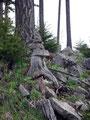 Das nächste Mandl stand im Walde!