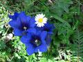... und wir genossen die Blüten in ihrer vollen Pracht. Anschließend machten wir eine kurze Rast und dabei ...