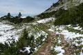 """Wahnsinn wie der Schnee im Minutentakt schwand! Das """"Weiß"""" wandelte sich mehr und mehr zu Grün. Ich eilte jedenfalls vom Gedanken an die Mauritzalm getrieben über den breiten Pfad retour."""