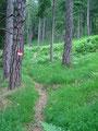 Der Weg war im unteren Teil super markiert und so kamen wir sehr schnell voran und legten einige Höhenmeter zurück.