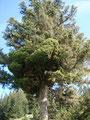 Was war das? Ein exotischer Alpenbaum, oder so? - KEINE AHNUNG!!!