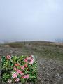 Der Weg führte mich anfangs über die mit rosa Blüten übersäte Hochfläche, bevor …