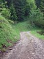 … bis zum nächsten Aufeinandertreffen mit der Forststraße. Wie schon gehabt, ein kurzes Stück entlang und wiederum …