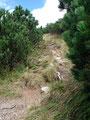 So, aber jetzt ging es nochmals richtig zur Sache. Wir wandten uns nach rechts und stiegen die steilen Serpentinen, unterhalb der mit Latschen bewachsenen Grathöhe und zuletzt auf dem Kamm  empor.