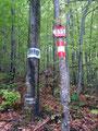 ... und schon waren wir wieder im Wald eingetaucht. Die tolle Wegmarkierung ...