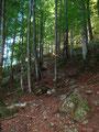 … danach über Laub und Steinen in unterschiedlichen Größen ging es weiter bergwärts.